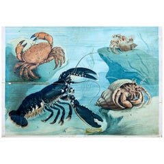 Crustaceans, Vintage Wall Chart
