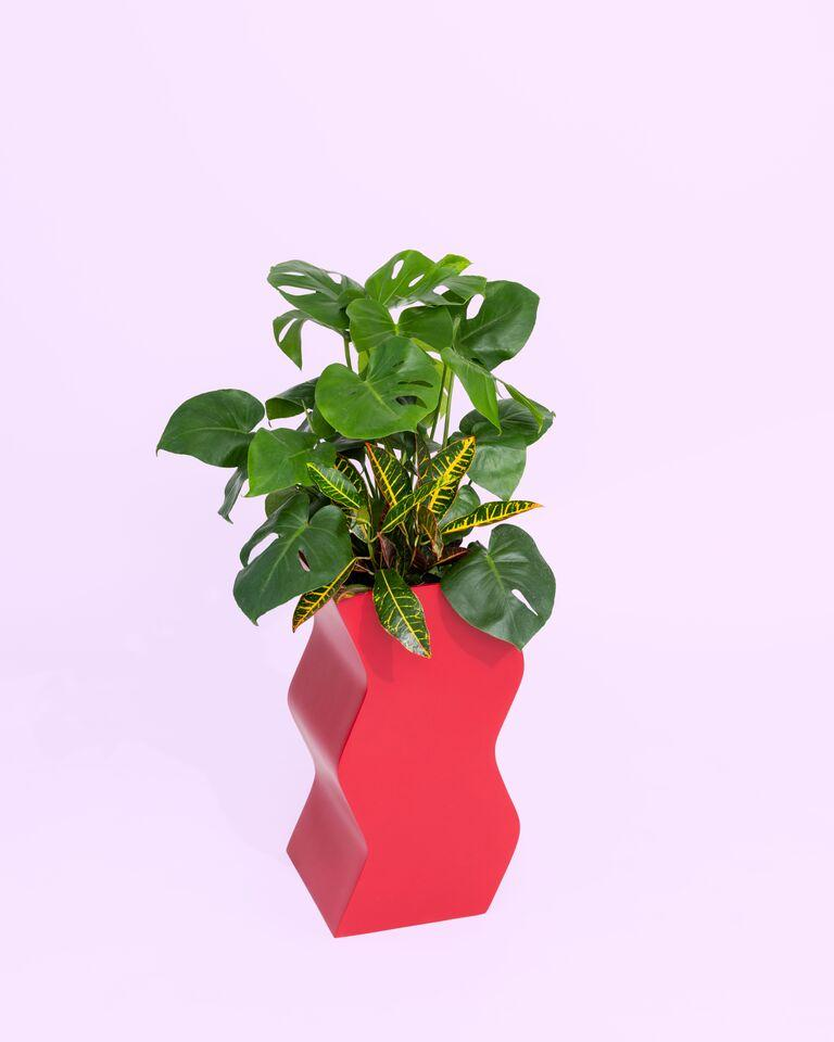 Modern Curvy Planter by Pieces, Red Fiberglass Planters For Sale