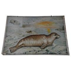 Cute Wall Chart Vintage Poster Seal Marine Wildlife