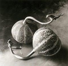 Cy DeCosse, Squash,  1995, still life, platinum print