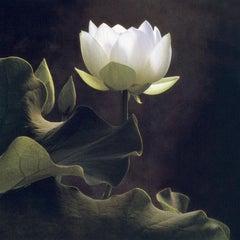 Cy DeCosse, White Lotus, 2005, gum dichromate