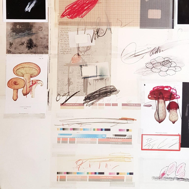 Natural History Part 1 Mushrooms n. X - Original Mixed Media by Cy Twombly For Sale 3
