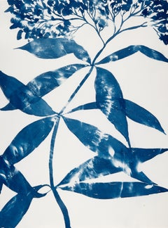 Boneset, Botanical work on paper, Cyanotype, Blue, One of a kind