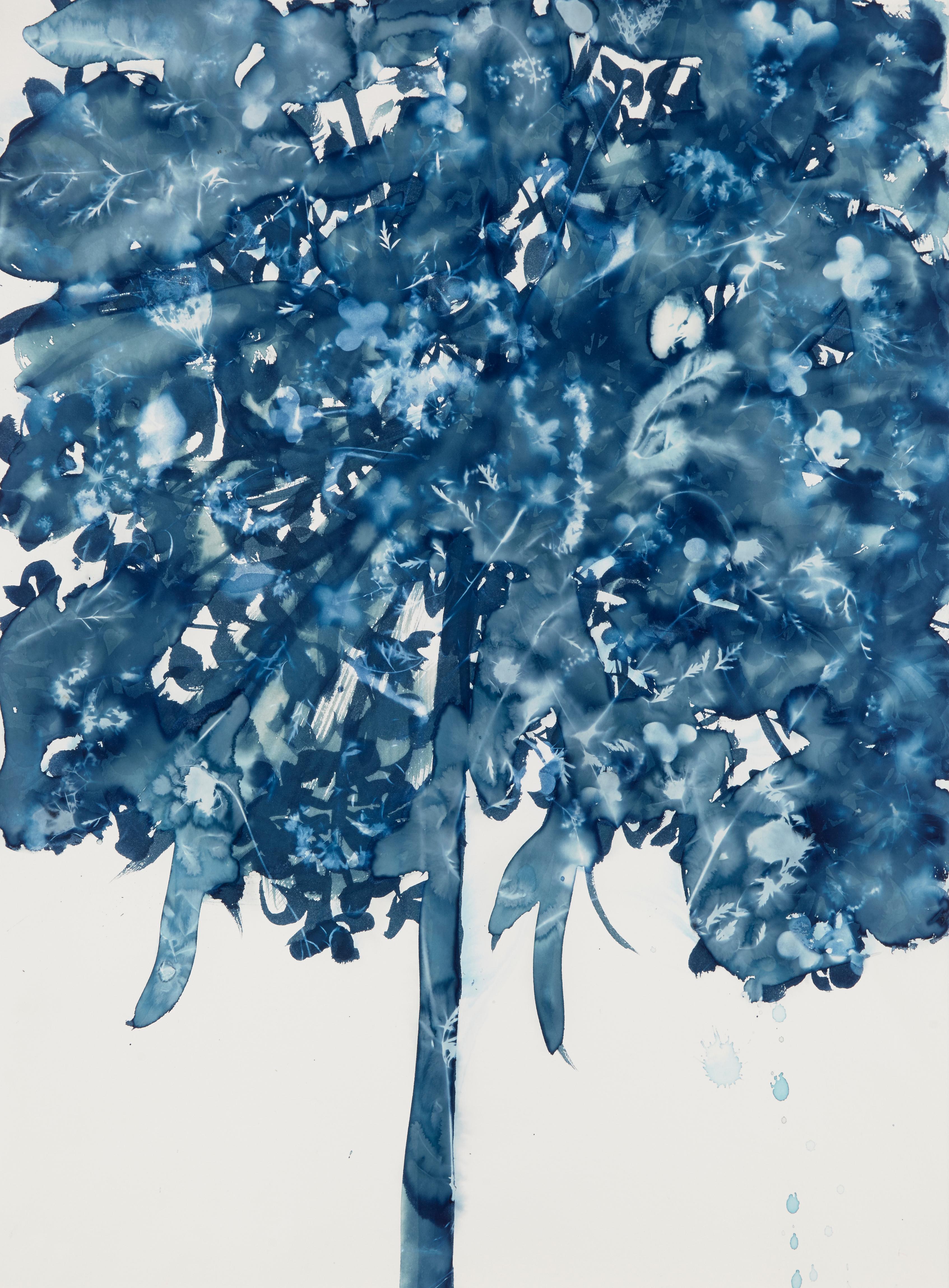 Daucus Carota, Botanical, Flowers, work on paper, Cyanotype, Blue, Original Art