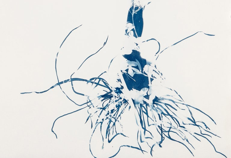 Waltz, Botanical, work on paper, Cyanotype, Blue, Nature, monoprint, Original - Painting by Cynthia MacCollum