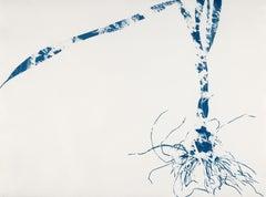 Waltz, Botanical, work on paper, Cyanotype, Blue, Nature, monoprint, Original