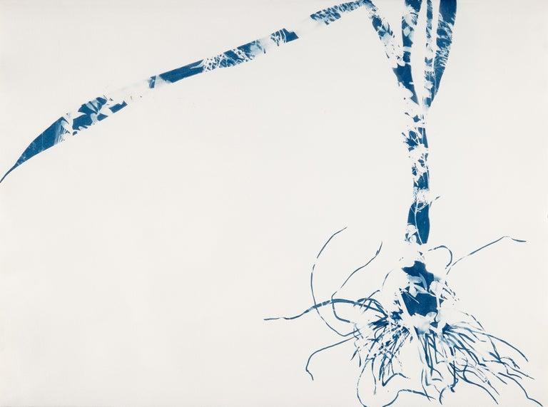 Cynthia MacCollum Landscape Painting - Waltz, Botanical, work on paper, Cyanotype, Blue, Nature, monoprint, Original