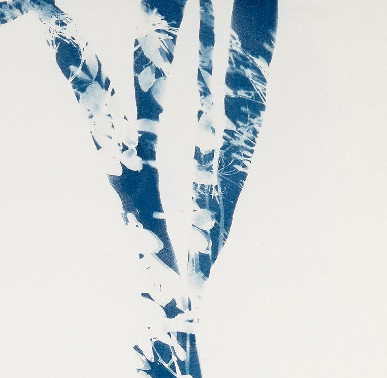 Waltz, Botanical work on paper, Cyanotype, Blue, One of a kind, monoprint - Contemporary Print by Cynthia MacCollum