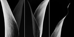 Original Triptych Photography by Cyrille Druart