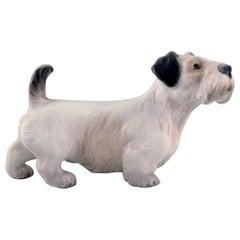 Dahl Jensen Porcelain Figure, Sealyham Terrier, 1930s-1940s