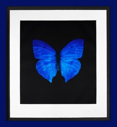 Damien Hirst, 'Butterfly Soul' Etching, Blue, 2007