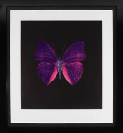 Damien Hirst, Butterfly Souls Etching, Violet, 2007