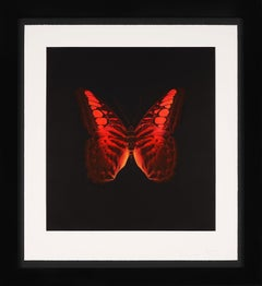'Red Butterfly' Etching, 2008