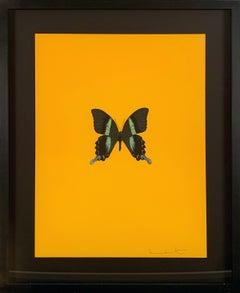 Six Butterflies III