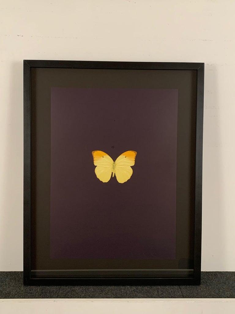 Six Butterflies IV For Sale 1