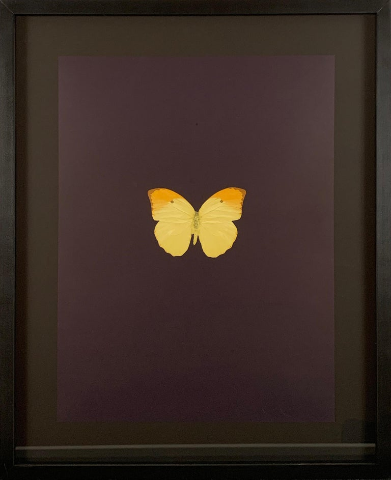"""Artist:  Hirst, Damien Title:  Six Butterflies II Date:  2011 Medium:  Polymer-gravure block prints Unframed Dimensions:  25"""" x 19.5"""" Framed Dimensions:  33.5"""" x 27"""" Signature:  Pencil signed by the artist lower right  Edition:  /55"""
