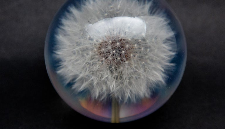Dandelion Paperweight In New Condition For Sale In New York, NY