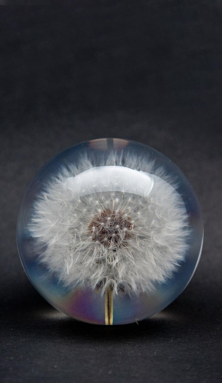 Contemporary Dandelion Paperweight For Sale