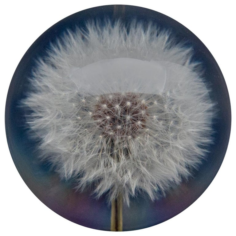 Dandelion Paperweight For Sale
