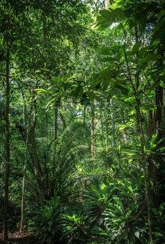 In Paradisum #10 - Rainforest, Brazil - Landscape Photography