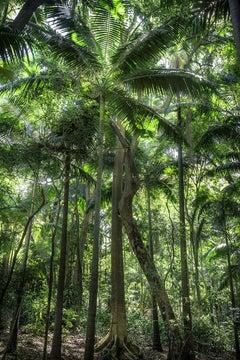 In Paradisum #11 - Rainforest, Brazil - Landscape Photography