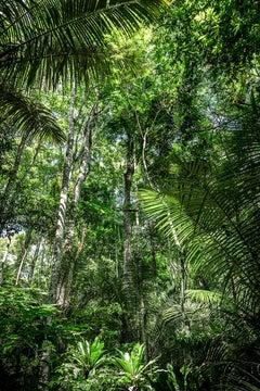 In Paradisum #12 - Rainforest, Brazil - Landscape Photography