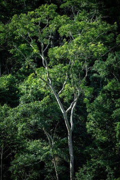 In Paradisum #13 - Rainforest, Brazil - Landscape Photography