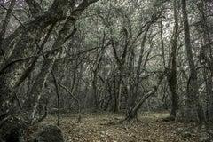 WALD #1 Inside a Forest - Landscape Photography