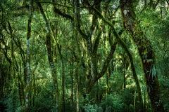 VERT #4 Inside a Forest  Landscape Photography