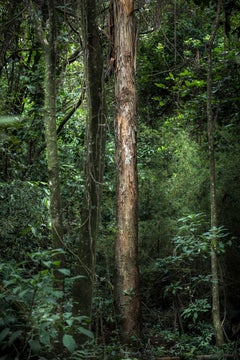 VERT - Rainforest, Brazil - Landscape Photography