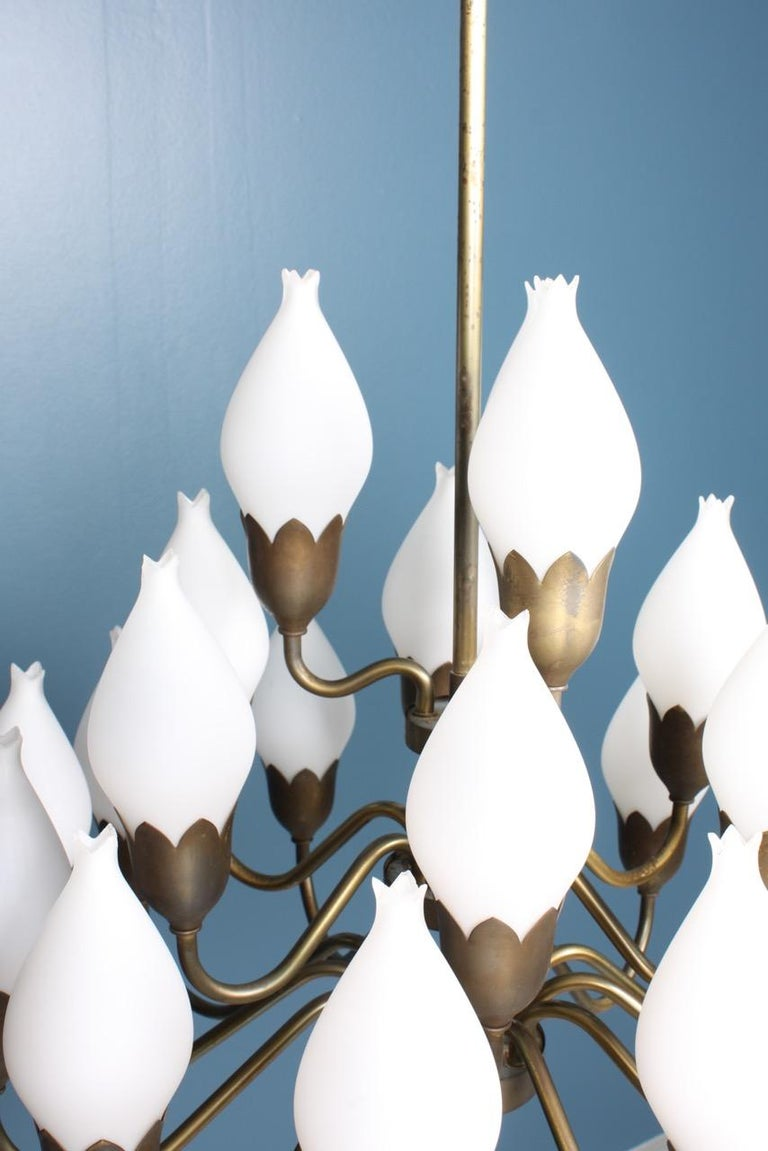 1950s tulip chandelier in brass and white glass designed and made by Fog & Mørup, Denmark. Great original condition.