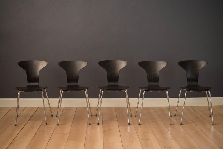 Mid-Century Modern set of 'Mosquito' Munkegård model no. 3105 chairs designed by Arne Jacobsen for Fritz Hansen, Denmark. This set includes five stackable chairs constructed of bent laminated plywood finished in black lacquer. Supported by sturdy