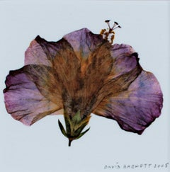 """Hybrid Hibiscus II,"" Original Photograph Giclee Print signed by David Barnett"