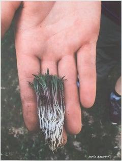 """Symmetrical Mystery Plant - Green/Purple/White,"" photograph by David Barnett"