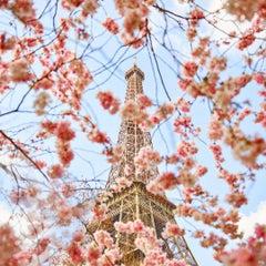 Cherry Blossoms, Champs de Mars, Paris, France