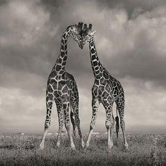 David Burdeny - Heads Together, Kenya, Africa (BW Photograph)