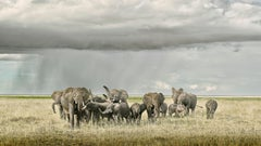 Elephant Day Care, Amboseli, Kenya