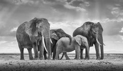 Elephant Family, Maasai Mara, Amboseli, Kenya