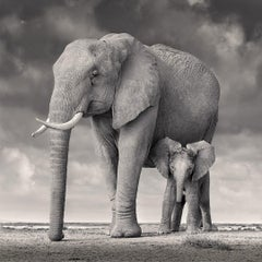 Elephant Mother and Calf, Amboseli, Africa, Wildlife