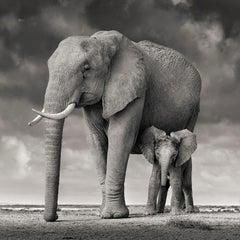 Elephant Mother and Calf II, Amboseli, Kenya