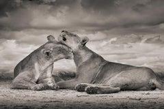 One Love, Serengeti, Africa