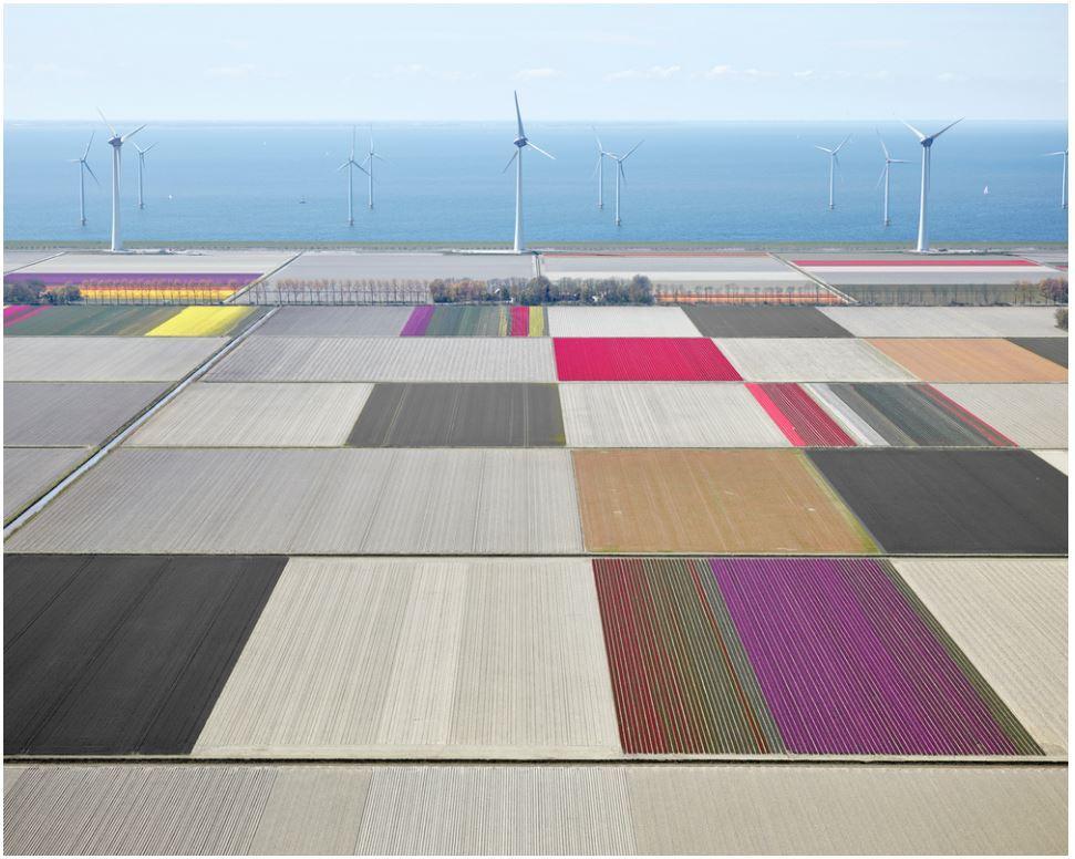 Tulips and Turbines 01, Noordoostpolder, Netherlands