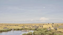 Zebra at watering hole, Maasai Mara, Kenya, Africa