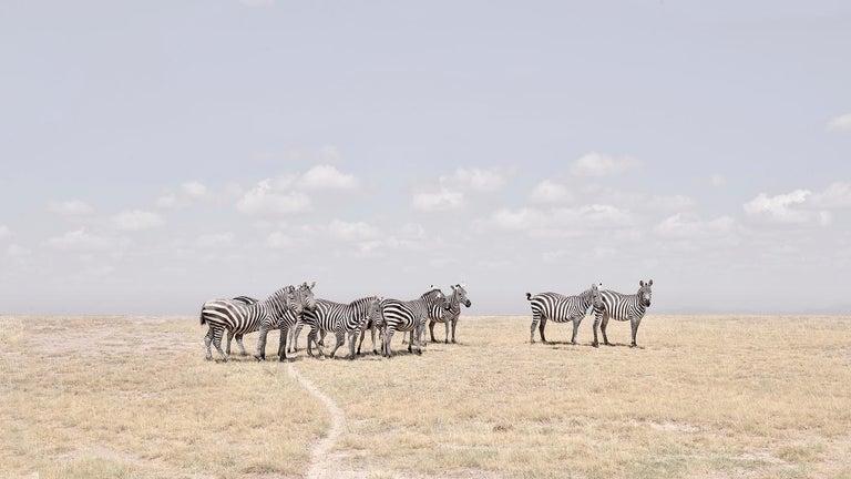 Zebra Plains, Maasai Mara, Kenya, Africa - Photograph by David Burdeny