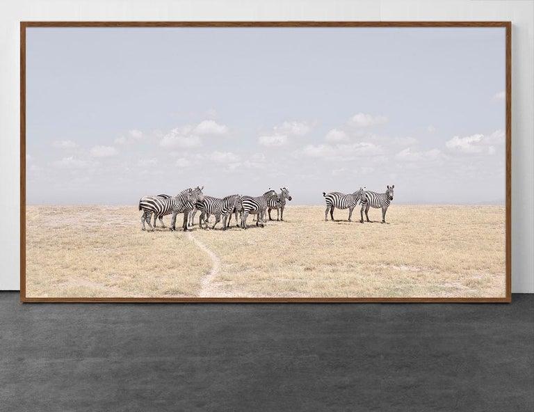 David Burdeny Color Photograph - Zebra Plains, Maasai Mara, Kenya, Africa