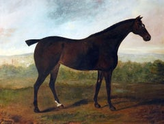 A dark brown thoroughbred Horse standing in an extensive English landscape