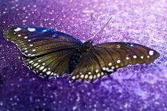 David Drebin, Fragile Beauty