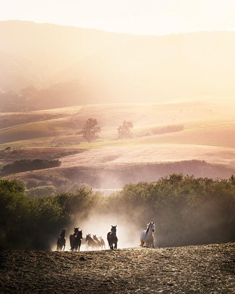 David Drebin Landscape Photograph - Morning Glory.