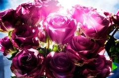 Spotting Rose