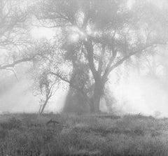Backlighted Tree, Fort Davis, Texas